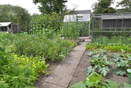 stone allotment vegetable patch