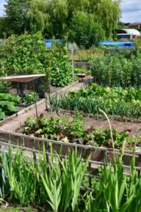 Photo of Stone Town Council Allotment Site
